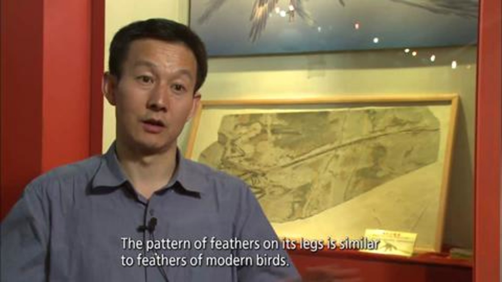 History Of Life: The Story of the Feather