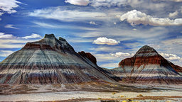 Petrified Forest and Other Fossil Parks